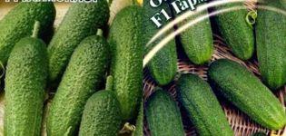 A Harmonist fajta uborka és termesztésének leírása