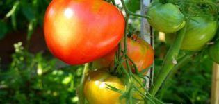 A Danko paradicsomfajta leírása és termése
