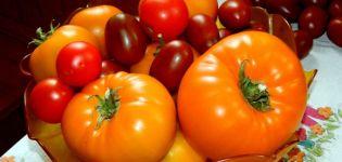 Caractéristiques et description de la variété de tomate géante orange, son rendement