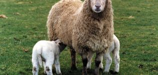 Aký je správny názov ovčieho mlieka, aké výrobky a syry sa z neho vyrábajú?