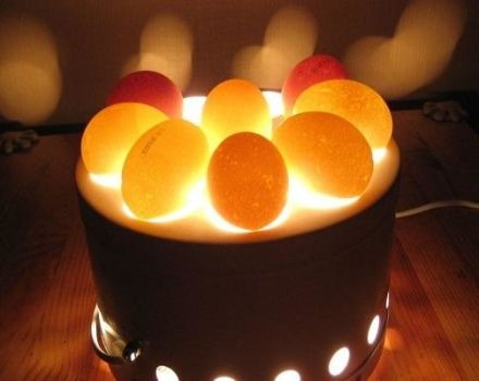 Kananmunien ovoskopiointimenettelyn ominaisuudet päivittäin