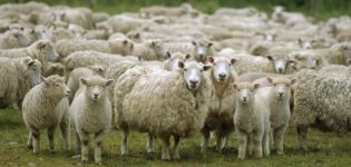 Países líderes en la cría de ovejas y donde se desarrolla esta industria, donde hay más ganado