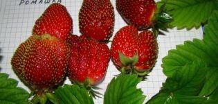 A szamóca fajtájának leírása és jellemzői Kamilla, termesztés és szaporítás