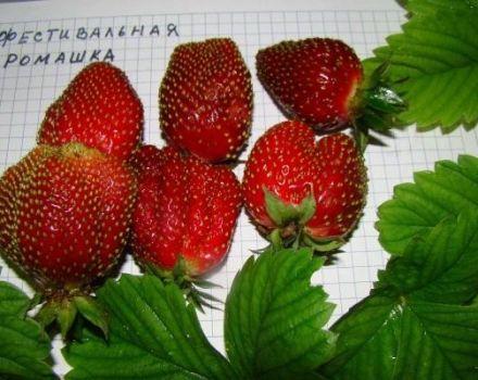 Opis a charakteristika odrody jahôd, pestovanie a rozmnožovanie jahôd