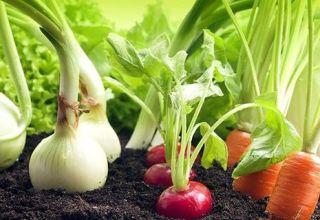 Wat is beter om naast paprika's in een kas en in het open veld te planten