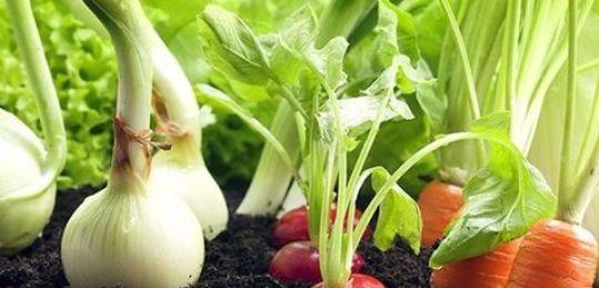 Τι είναι καλύτερο να φυτέψετε δίπλα σε πιπεριές σε θερμοκήπιο και ανοιχτό χωράφι