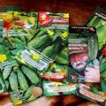 Descrierea celor mai bune semințe de castraveți și evaluarea celor mai productive soiuri pentru 2020