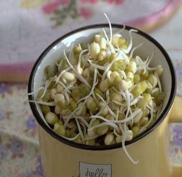 Πώς να φυτρώνετε φασόλια γρήγορα και σωστά στο σπίτι σε 1 ημέρα
