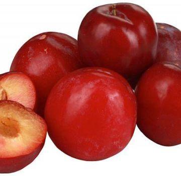 Descrierea și caracteristicile soiului de prune Ball Ball, plantare și îngrijire