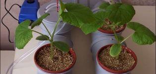 Technológia pestovania uhoriek v hydroponii doma