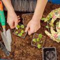Kalendar sadnje lunarne sadnice vrtlara za kolovoz 2020. godine