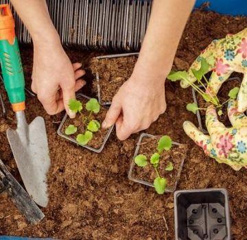 Calendarul lunar de însămânțare a grădinarului de plantare pentru august 2020