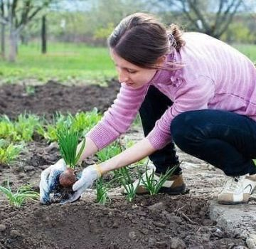 Što se može posaditi nakon češnjaka sljedeće godine u vrtu
