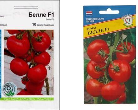 Az Bell1 f1 paradicsomfajta leírása, jellemzői és termesztése