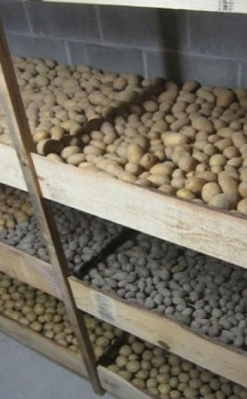 Ako a kde správne skladovať zemiaky doma v byte