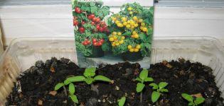 Descripción de la variedad de tomate Mikron NK, método de cultivo y características.