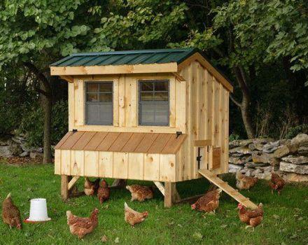 Podrobné pokyny na výrobu kurčaťa pre 10 kurčiat vlastnými rukami