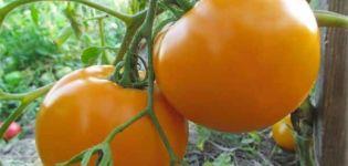 Description de la variété de tomate Orange miracle et ses caractéristiques