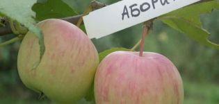 Az őslakos almafajta leírása és a kultúra főbb jellemzői, termesztési régiók