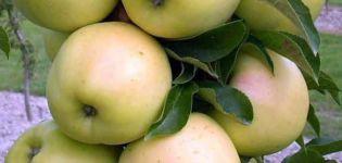 Descrizione e caratteristiche della varietà di mele Medoc, regole di coltivazione e cura