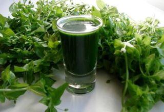 A fűszeres gyógynövény gyógyító tulajdonságai és ellenjavallatai, az egészség előnyei és káros hatásai
