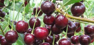 Descripción de las ventajas y desventajas de la variedad de cereza Kharitonovskaya y las características del rendimiento.