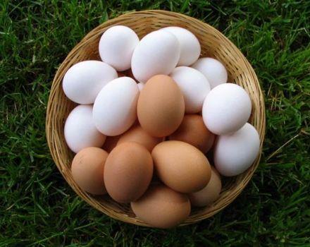De ce ouăle de pui sunt albe și brune, ceea ce determină culoarea