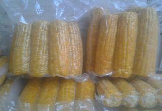 Kuinka säilyttää maissia maissukupolla talveksi kotona