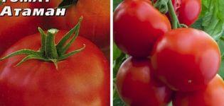 Descrierea soiului de tomate Ataman și caracteristicile acestuia