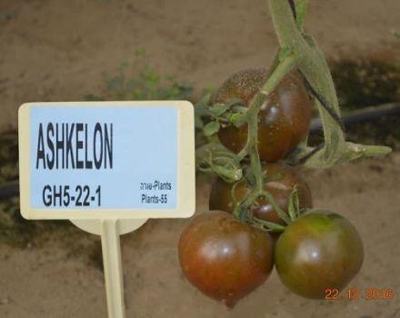 Az új hibrid paradicsomfajta, az Ashkelon F1 leírása