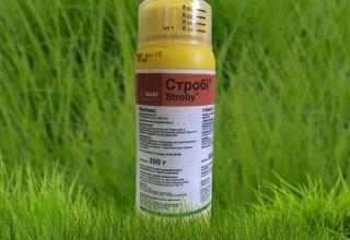 A Strobi fungicid használati utasításai, a hatásmechanizmus és az analógok