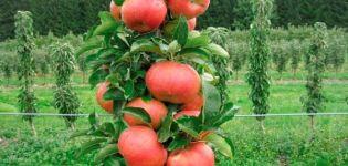 Výsadba a starostlivosť o stĺpy jabloní na Sibíri, pestovanie a najlepšie odrody