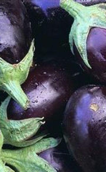 Ce soiuri de vinete sunt mai bune de plantat și de cultivat în regiunea Moscova, în câmp deschis și în sere