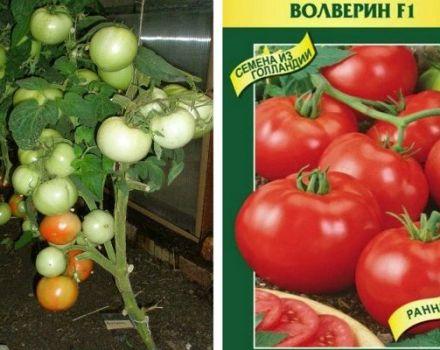 Descripción de la variedad de tomate Volverin y sus características