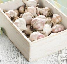 Πώς να στεγνώσετε σωστά το χειμερινό σκόρδο μετά το σκάψιμο και πού να το αποθηκεύσετε;