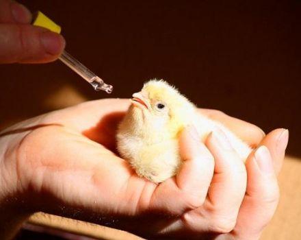 A csirkékhez tartozó legjobb vitaminkomplexek leírása és összetétele, adagolás