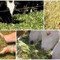 Tipuri de furaje pentru bovine și valoare nutritivă, formularea dietei