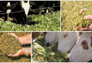 A szarvasmarha-takarmány típusai és tápértéke, étrend-összetétel