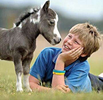 Descripción de razas de mini caballos y reglas de cuidado, los individuos más pequeños del mundo.
