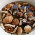A 10 legjobb recept a gombák sózásához otthon, hidegen és melegen