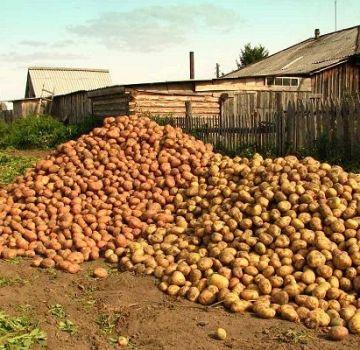 Popisy a vlastnosti najlepších odrôd zemiakov a hodnotenie roku 2020
