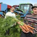 Când să scoateți morcovii din grădină pentru depozitare
