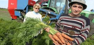Cuándo sacar las zanahorias del jardín para almacenarlas