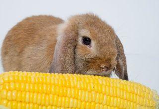 ¿Qué mezcla de granos es mejor para alimentar conejos y cocinar con tus propias manos?