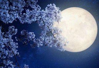 Povoljni i nepovoljni dani u travnju za sadnju prema lunarnom kalendaru 2020