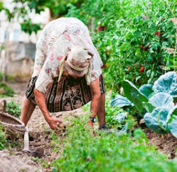 Comment désherber et traiter rapidement les carottes avec du kérosène anti-mauvaises herbes