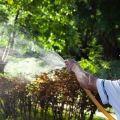 Kuvaus puutarhan 24 parhaasta sienitautien torjunta-aineesta, toimintamekanismi ja käyttöohjeet