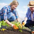 Calendarul de plantare lunară al grădinarului pentru luna mai 2020, zile favorabile