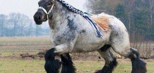 Descripción y características de los caballos de la raza Shire, condiciones de detención y cría.