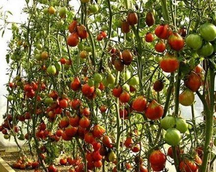 Descripción de la variedad de tomate Secado, sus características y cultivo.